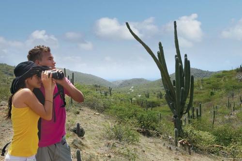 Ontdek Aruba bijvoorbeeld met een jeep safari